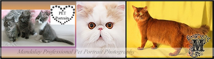 Pet Portraits - Cats and Dogs