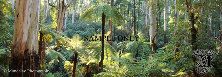 Dandenong Ranges National Park stock photo - Mandalay Photography