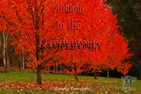 Dandenong Ranges in Autumn stock photo - Mandalay Photography